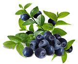 Acai Berry Extract Anthocyanin 25%