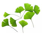 Ginkgo biloba extract Flavone 24% Lactones 6%